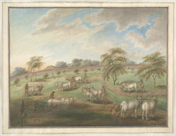Studies of men ploughing with pairs of bullocks